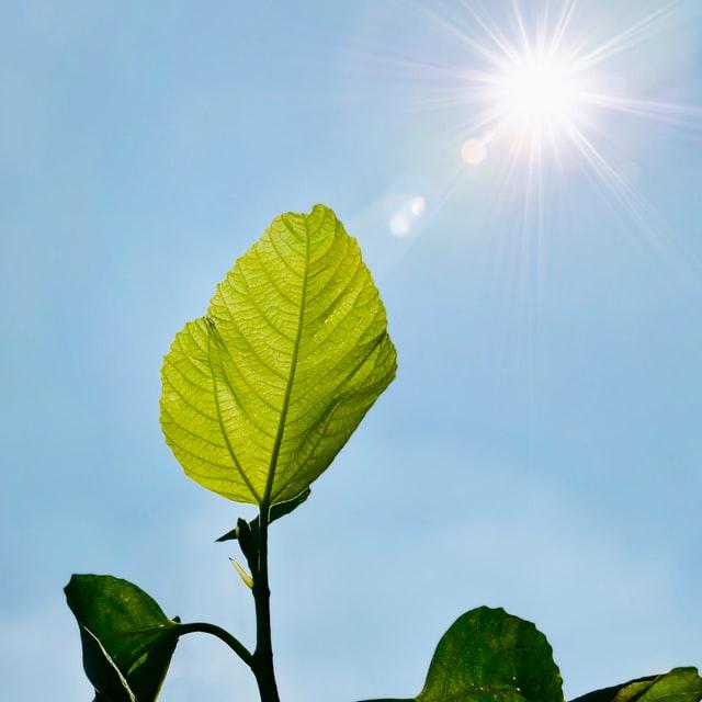 Ecosensors Umweltsensorik - Nachhaltig